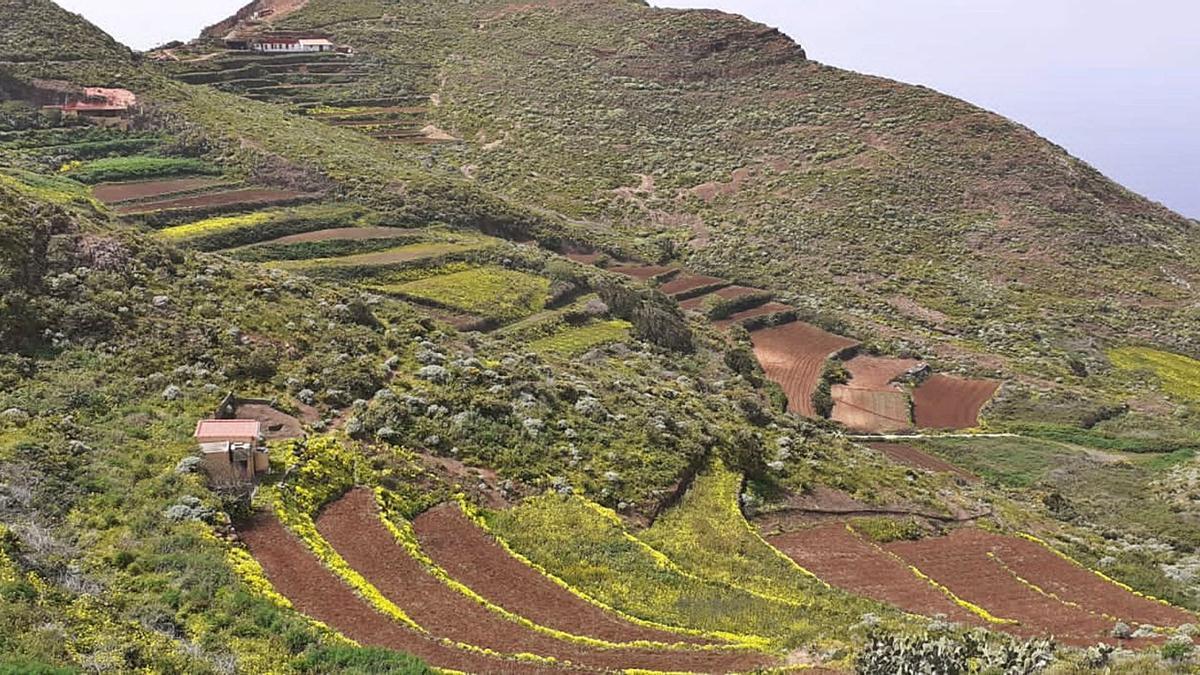 Imagen de zonas de cultivo.