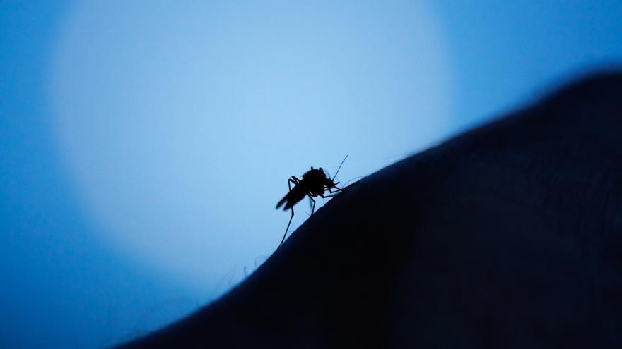 El sencillo remedio para que desaparezca una picadura de mosquito