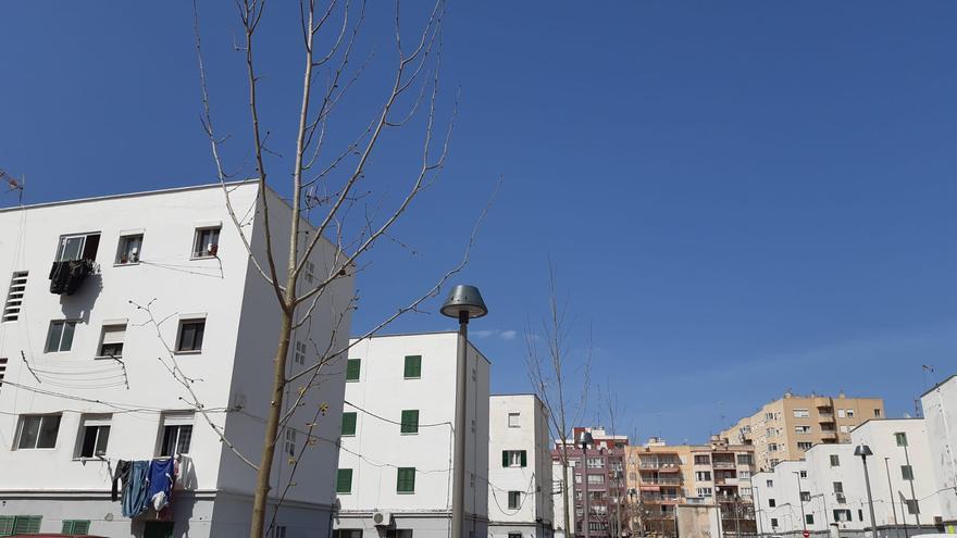 Presentadas 39 solicitudes para rehabilitar edificios del Camp Redó, Son Gotleu y Verge de Lluc