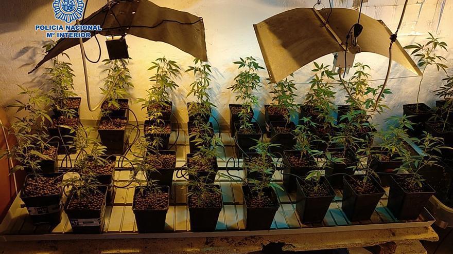 La Policía Nacional erradica varias plantaciones de marihuana en varias localidades de Zaragoza, Huesca y Teruel