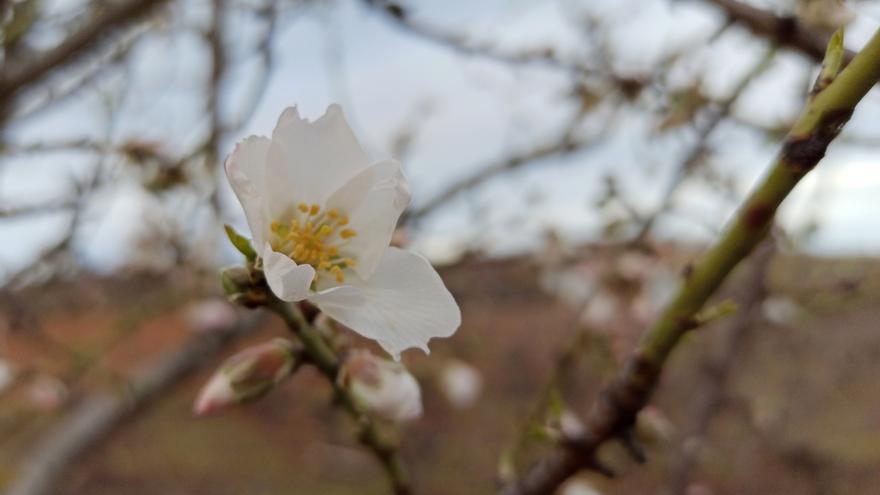 La primavera llega el próximo sábado a Castilla y León