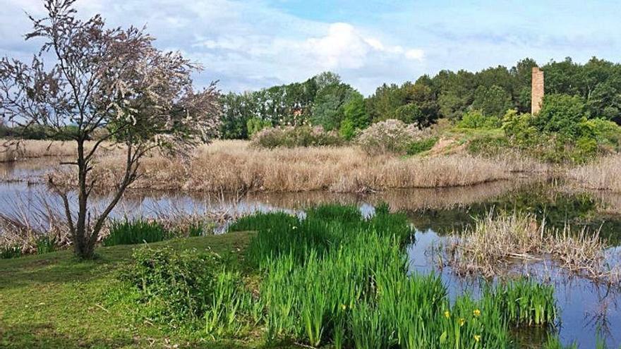 Santpedor registra més de 200 espècies d'ocells a l'aiguamoll