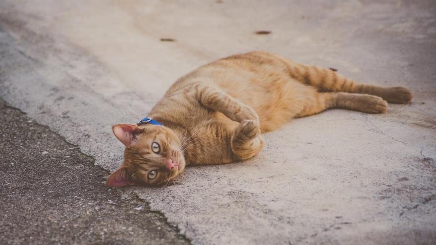 Inca aprueba un reglamento para gestionar las colonias felinas
