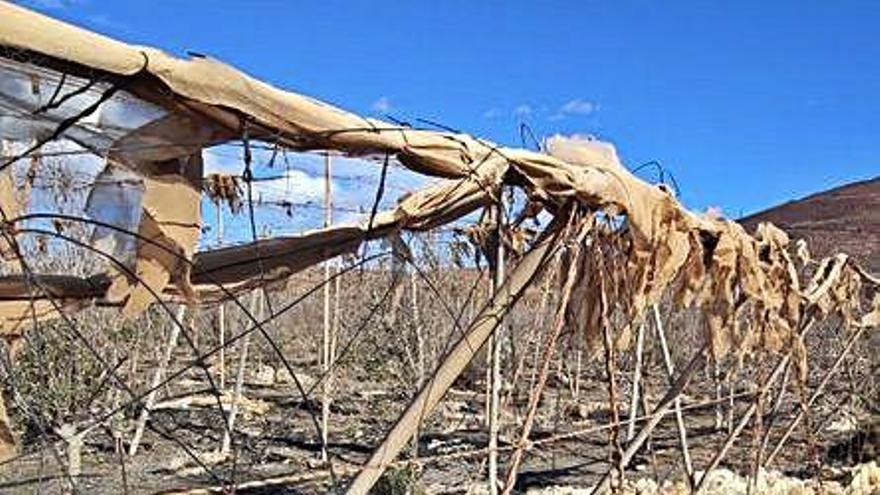 El Sureste trabaja en un plan para retirar los invernaderos abandonados