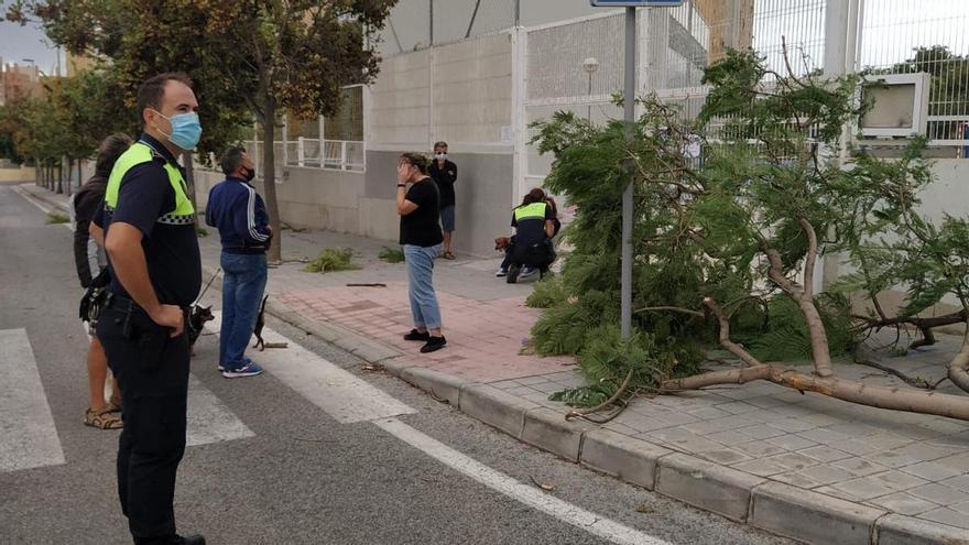 Una mujer herida por la caída de un árbol por el viento en Alicante