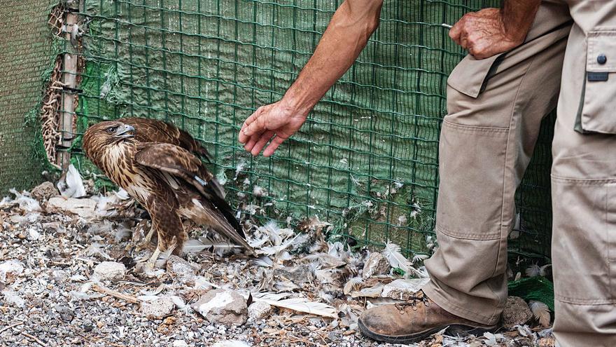 El centro de fauna silvestre de Tafira se consolida como referente europeo