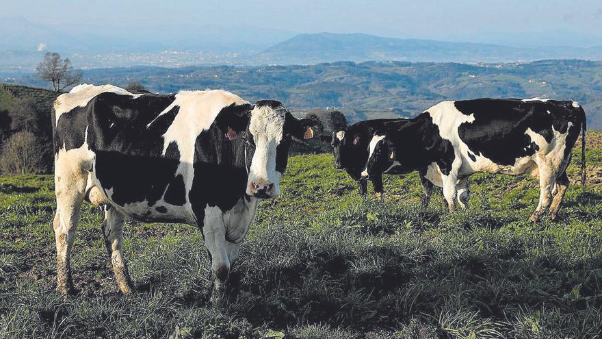 Los consejeros de la cornisa cantábrica analizan el futuro de su modelo agrario