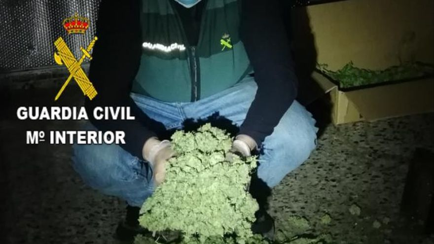 Cae una banda armada que exportaba marihuana desde Xàtiva y Canals