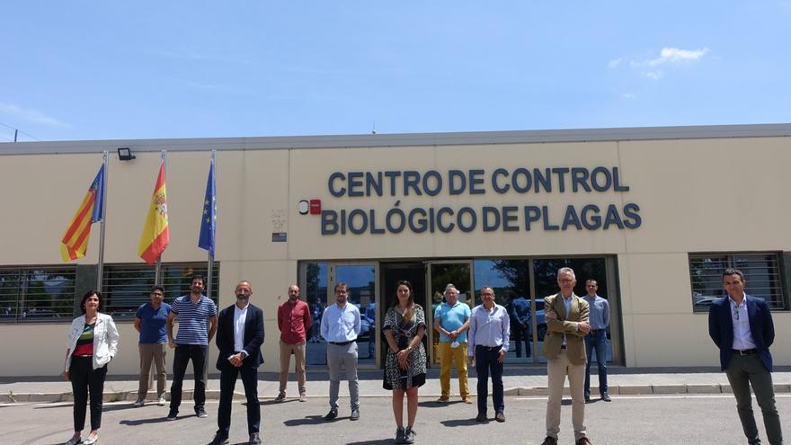 Agricultura ensaya un sistema de contagio a través de hongos para acabar con la plaga de la mosca del Mediterráneo