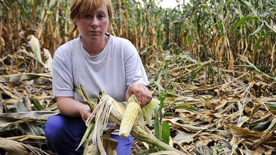 """Unións Agrarias considera """"muy escasas"""" las ayudas por daños de la fauna salvaje"""