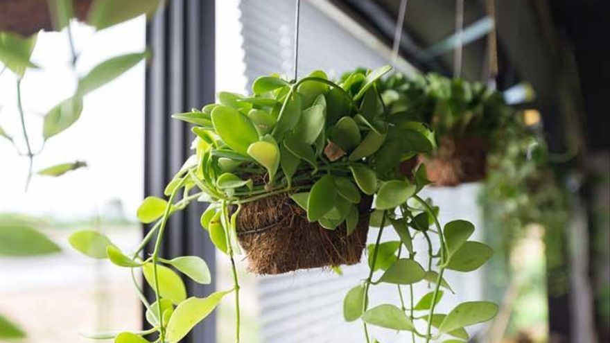 Cinco ideas de plantas decorativas para añadir a tu hogar