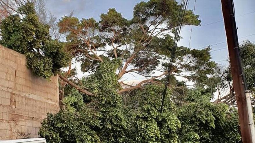 Cae un árbol en una carretera de La Laguna