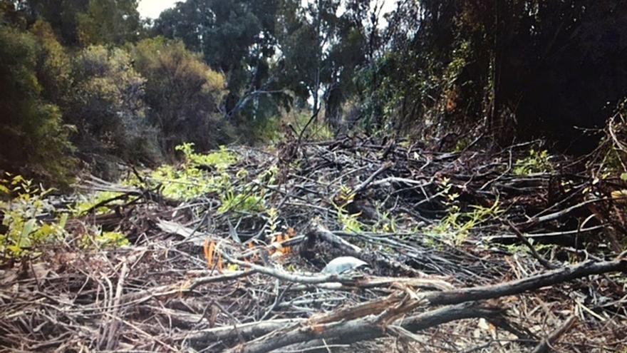 OSP tacha de nefastas la limpieza y  el desbroce del cauce del río Guadaiza