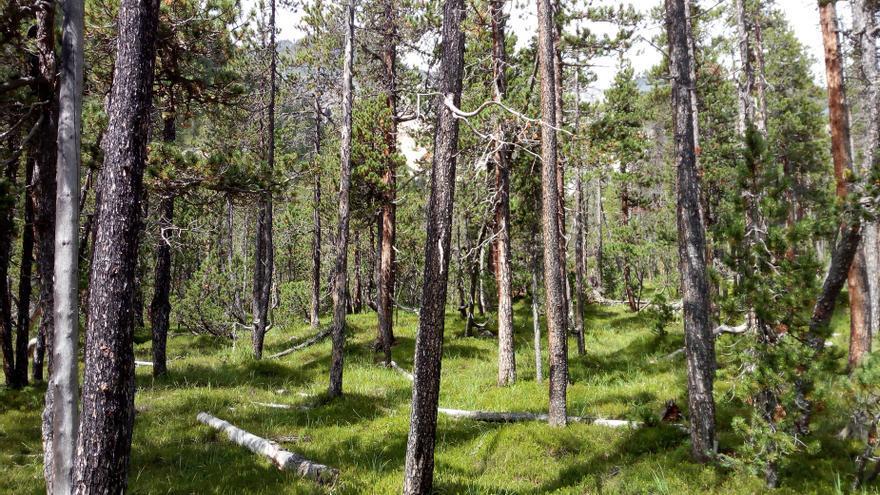 Un estudio internacional advierte: una elevada intensidad del uso de la tierra reduce los beneficios de la biodiversidad