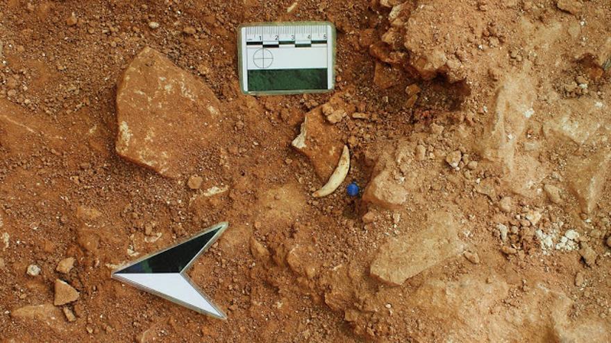 Hallan los restos de un lince ibérico que vivió hace un millón de años en Abanilla