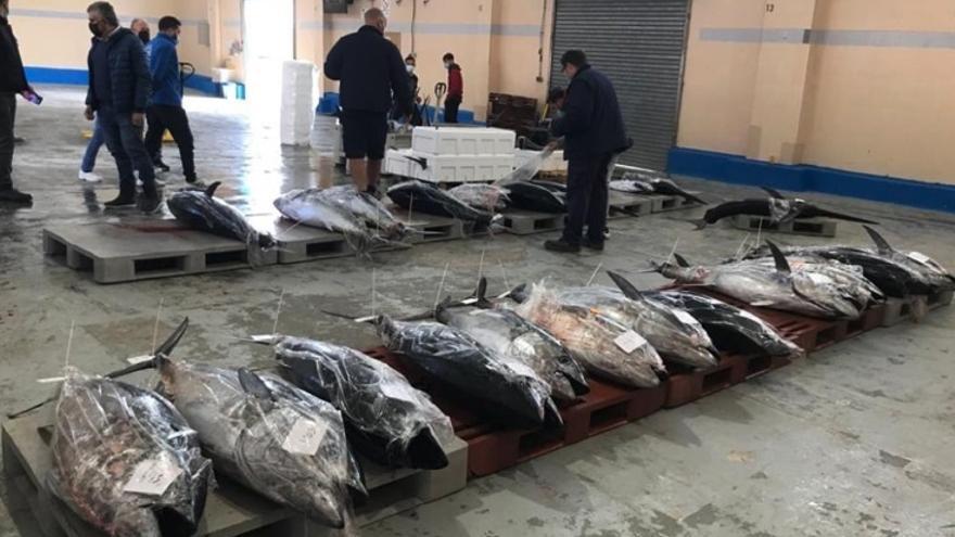 """Los pescadores reclaman ampliar la cuota del atún rojo al agotarla """"en solo 12 días"""""""