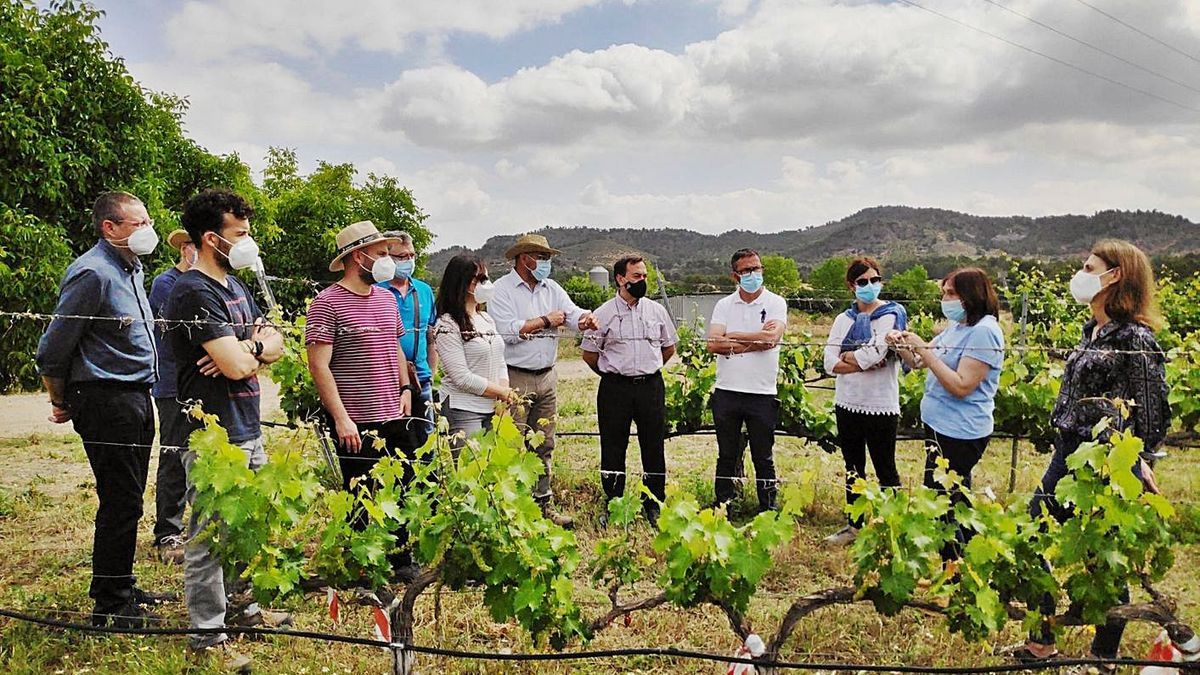 El director Imida visita Cehegín junto a representantes de los consejos reguladores. | CARM