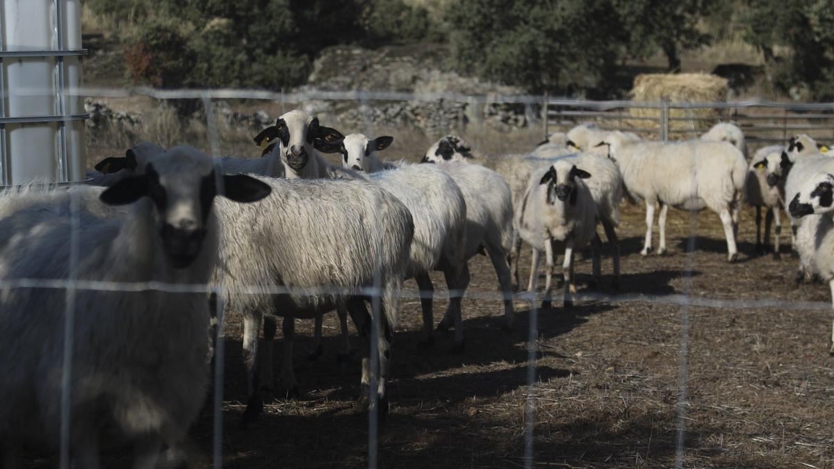 Una explotación ganadera en Zamora.
