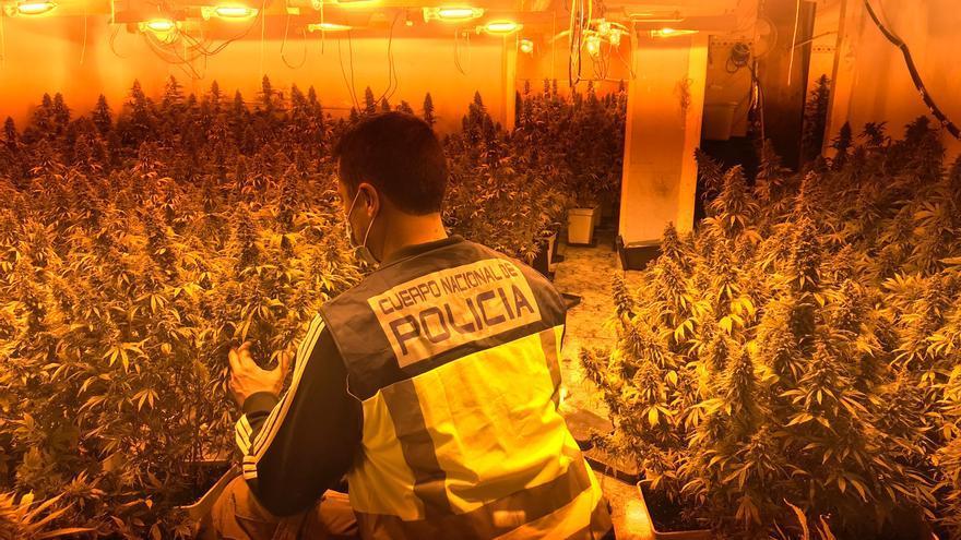 La Policía desmantela el principal centro de producción de marihuana de Palma