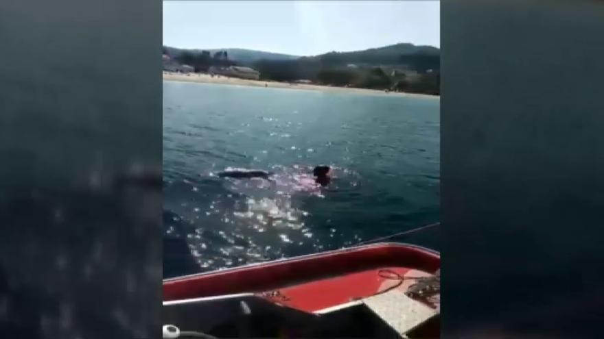 Cuidado con el delfín Manoliño, no es tu amigo