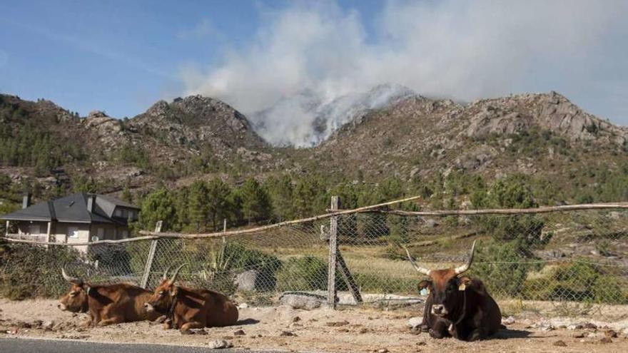 El macroincendio de Entrimo devoró más de seis hectáreas por minuto en cinco horas