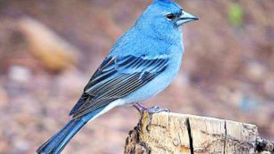Lanzan una campaña para proteger a especies en peligro de extinción de Canarias