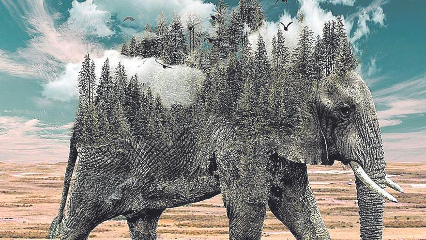 ¿Qué hacemos con la última elefanta del circo?