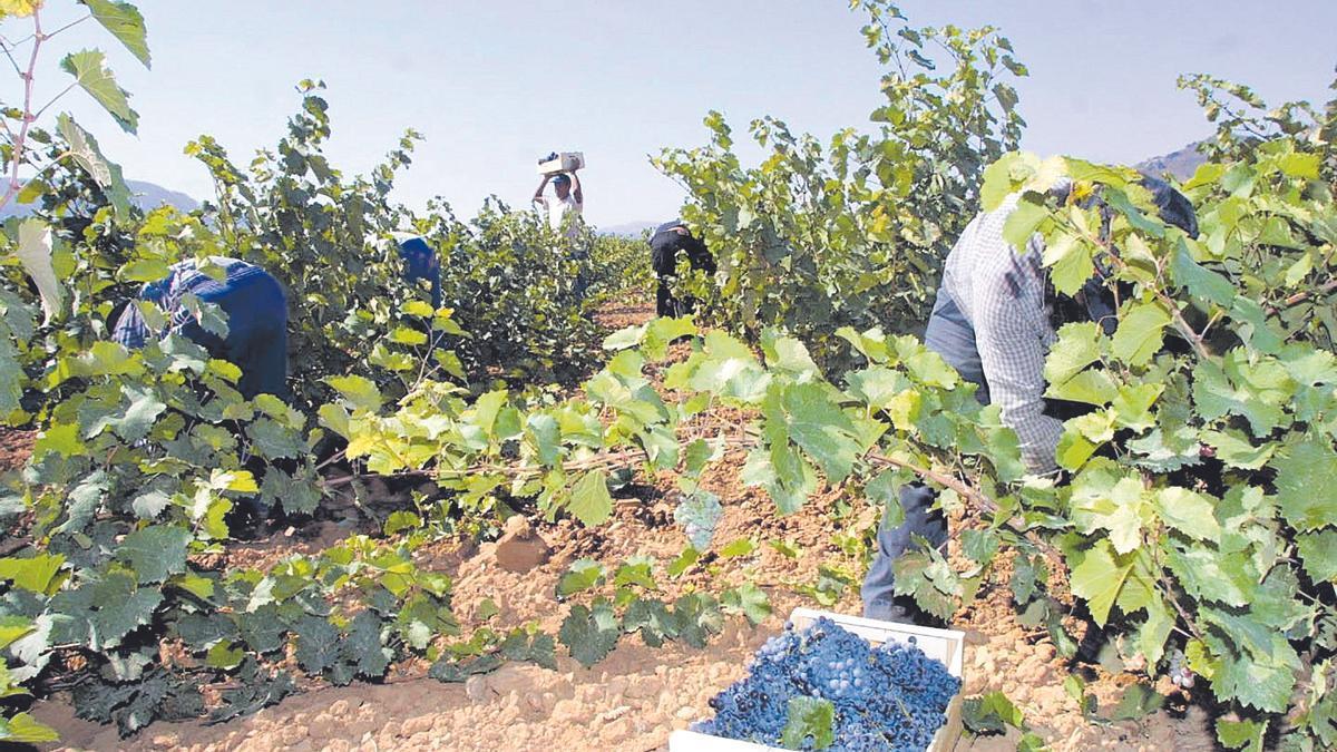 Los viticultores de Jumilla, entre los principales beneficiados de la supresión de aranceles con Estados Unidos.