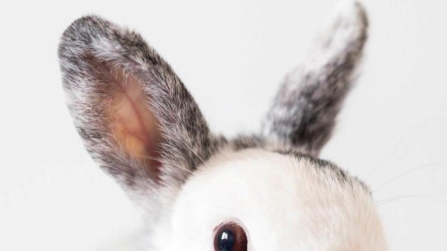 El orgasmo femenino lo inventó un conejo