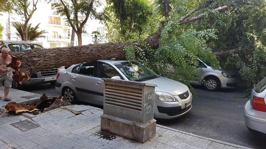 Un árbol cae sobre dos coches en el Coll d'en Rabassa
