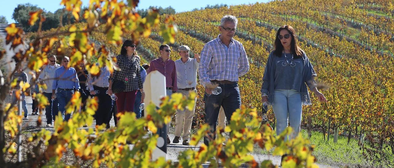La Junta defiende el «potencial turístico» de la Ruta del Vino Montilla-Moriles