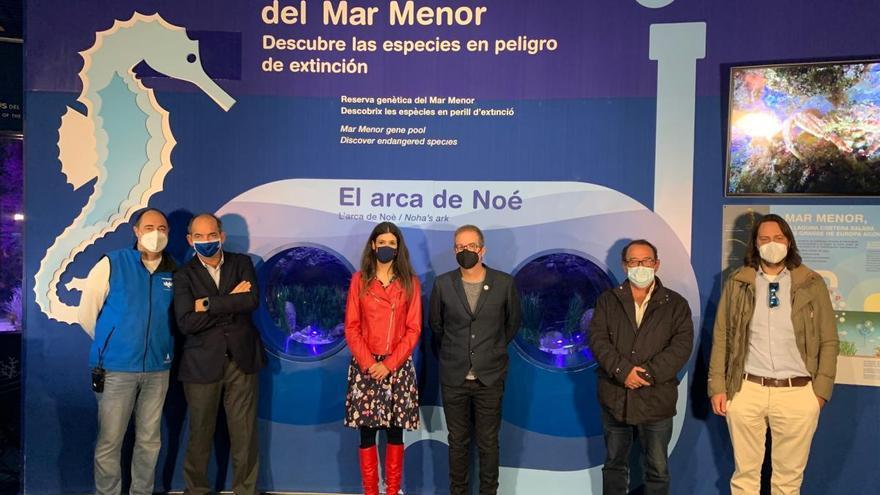 El Oceanogràfic de Valencia hace hueco al Mar Menor