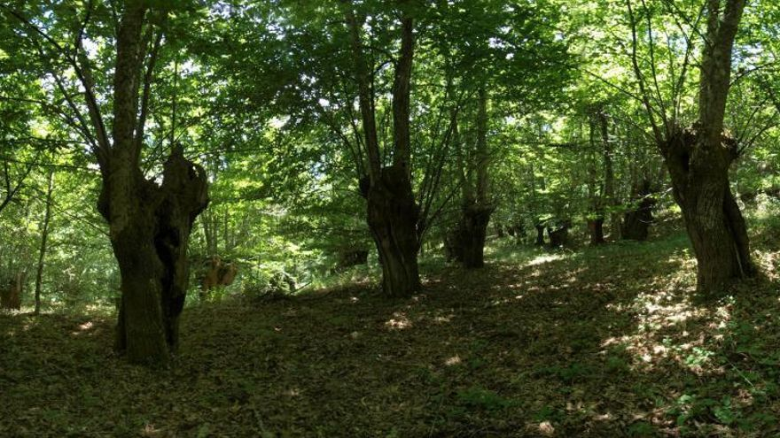 Bosque de leyenda