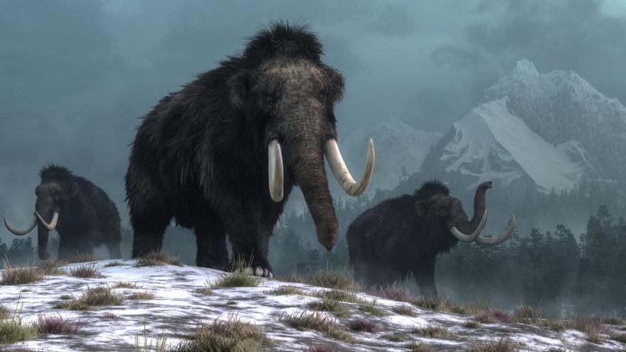 Los mamuts murieron por el cambio climático, no por el hombre