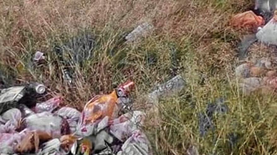 Limpieza y retirada de vertidos ilegales en el entorno del puente de piedra de Toro