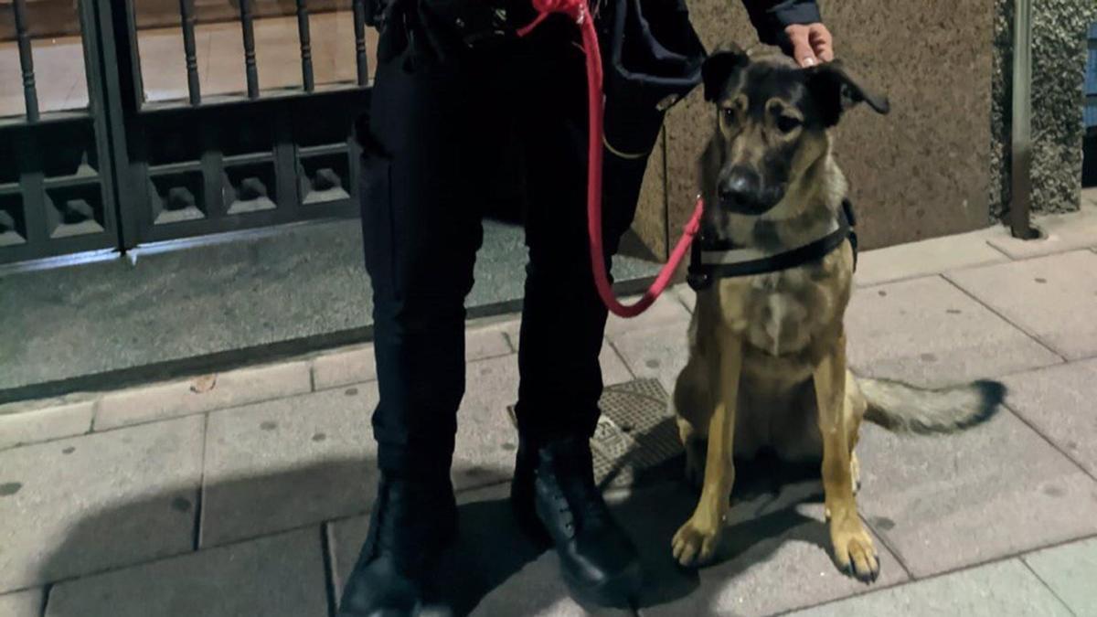 La perrita rescatada en Torrejón de Ardoz.