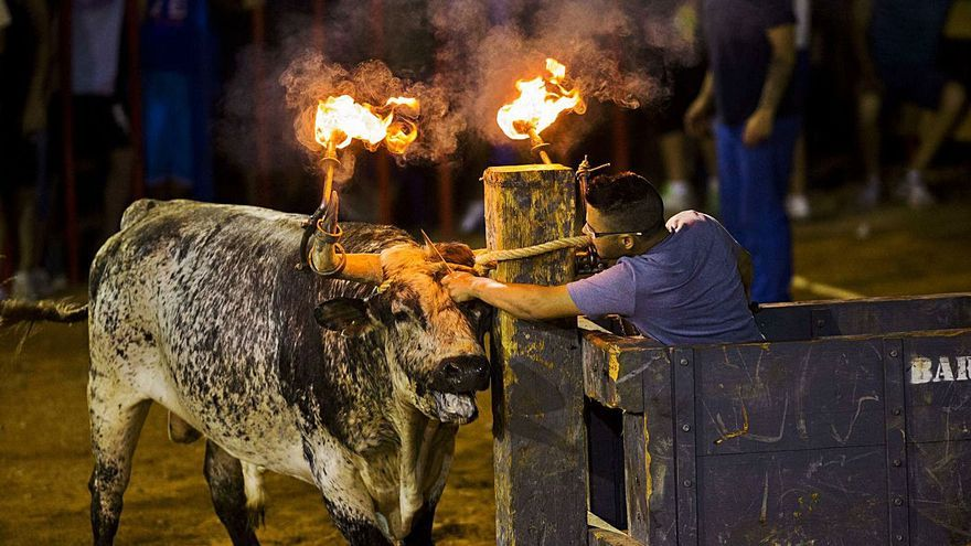"""Las peñas taurinas crean la """"ruta del bou"""" para revitalizar la fiesta"""