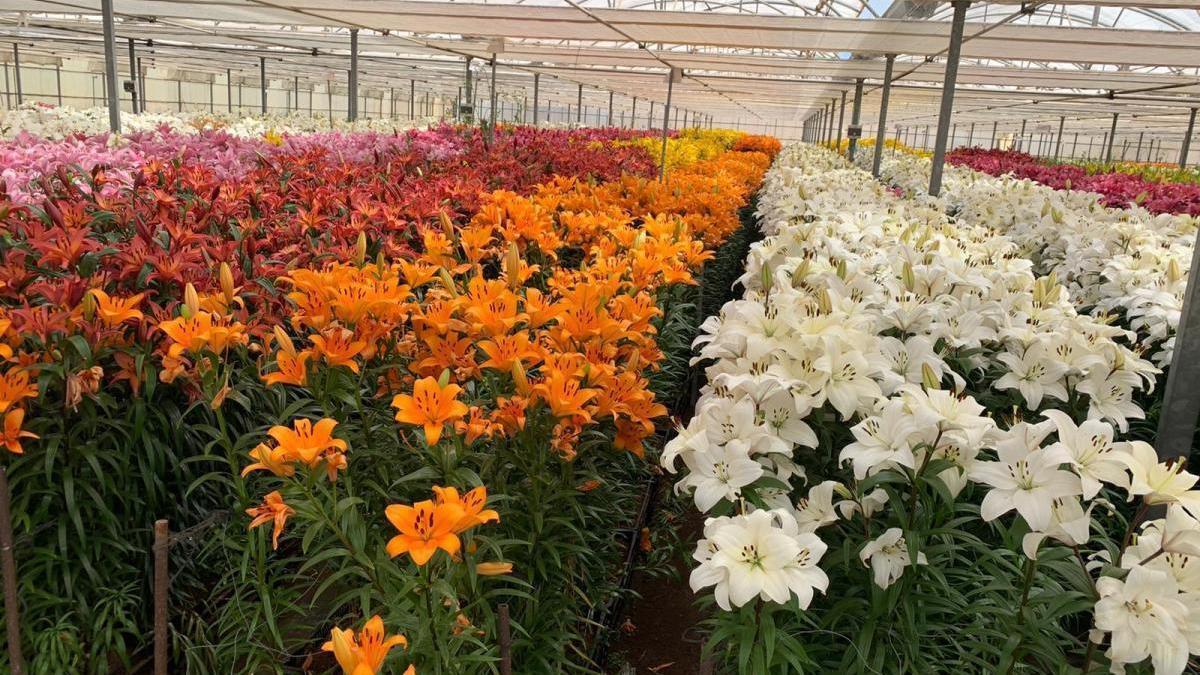 Las cooperativas de flores y plantas denuncian la inexistencia de medidas reales para ayudar al sector