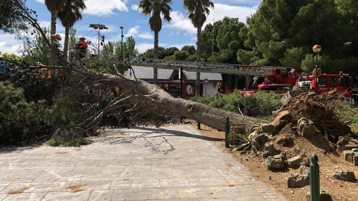 Un árbol de grandes dimensiones se desploma en los Pinares de Venecia