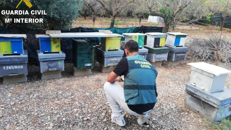 Detenido un hombre en Real por el robo de colmenas de abejas