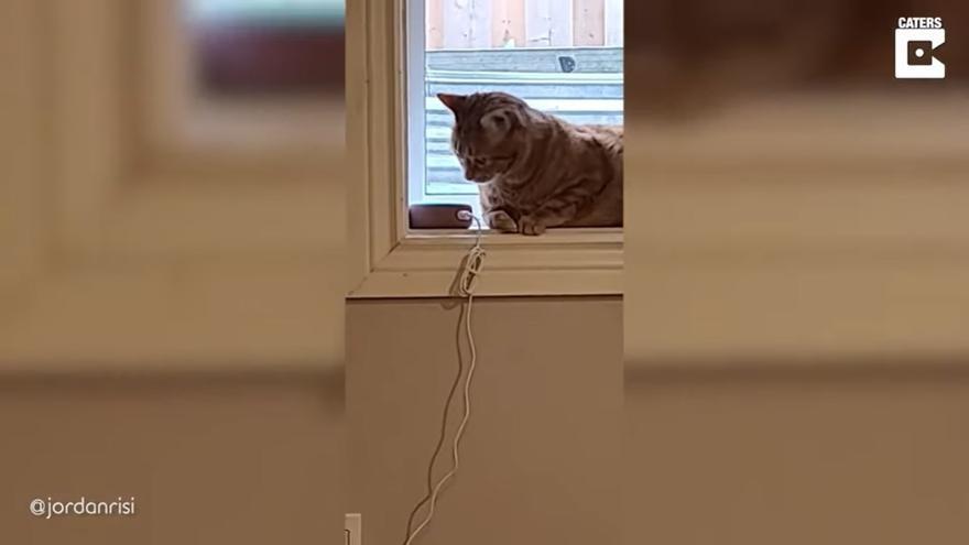 """""""Escolta Alexa, com sona un gos?"""": la broma a aquest gat es fa viral"""