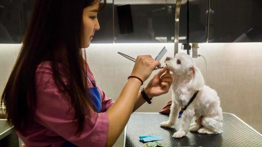 Masaje y manicura, la 'vida de perros' en Hong Kong