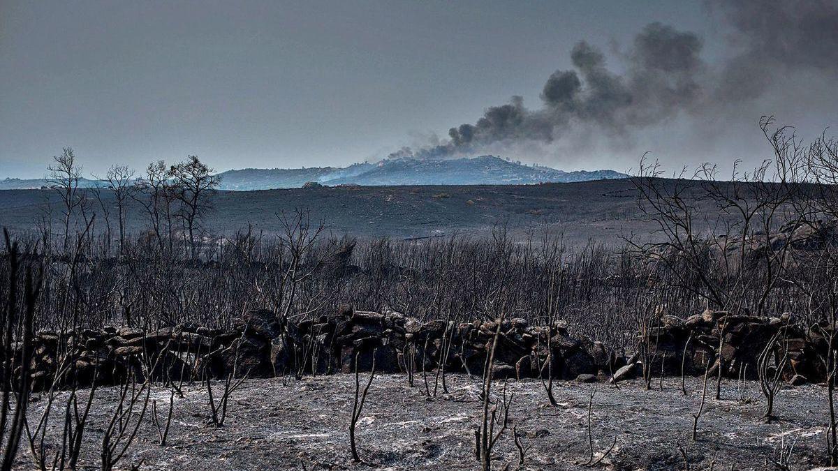 Montes calcinados por las llamas en Cualedro.