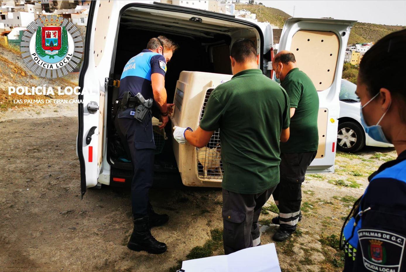 14 perros rescatados por la Policia Local en Pedro Hidalgo