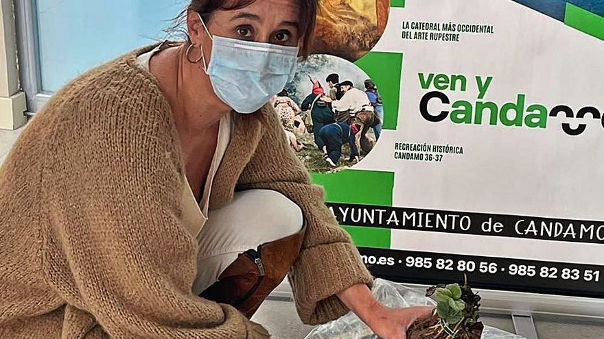 Asturias quiere conquistar la fresa: un ayuntamiento reparte 20.000 plantones entre los vecinos para reforzar su cultivo