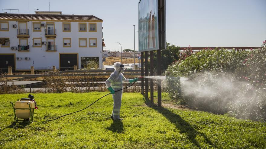 Confirman como falso positivo el caso del virus del Nilo que se detectó en Sevilla