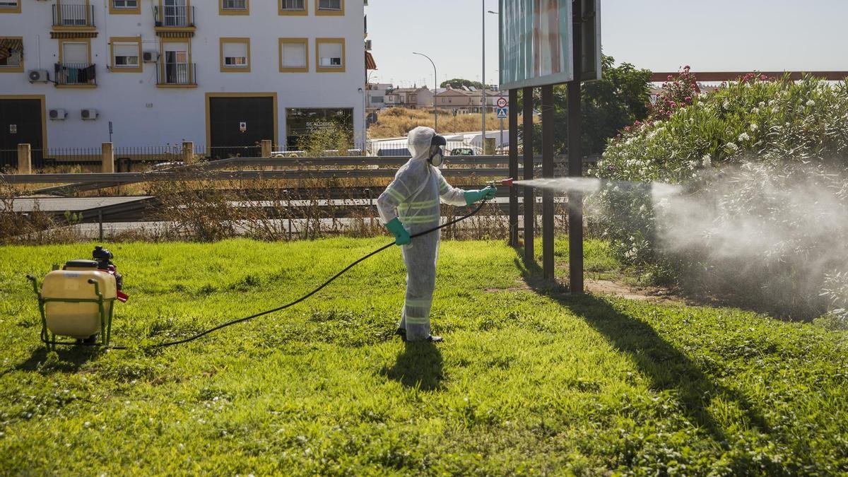 Labores de fumigación contra los mosquitos causantes del virus del Nilo en Coria del Río (Sevilla).