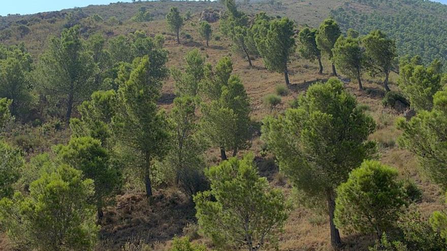La plantación de bosques para combatir el cambio climático es ineficaz