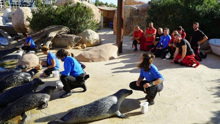 Un equip de l'UME entrena amb lleons marins de l'Oceanogràfic