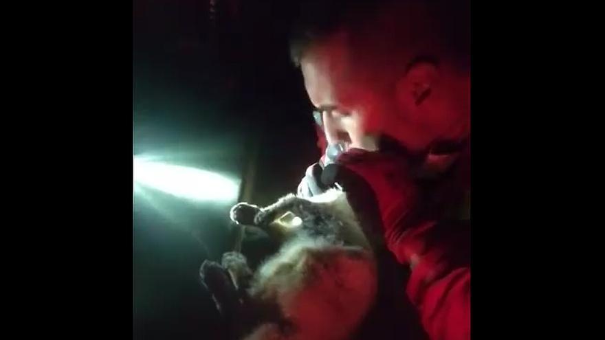 Un militar adopta al gato al que reanimó tras hallarlo asfixiado por las cenizas en La Palma